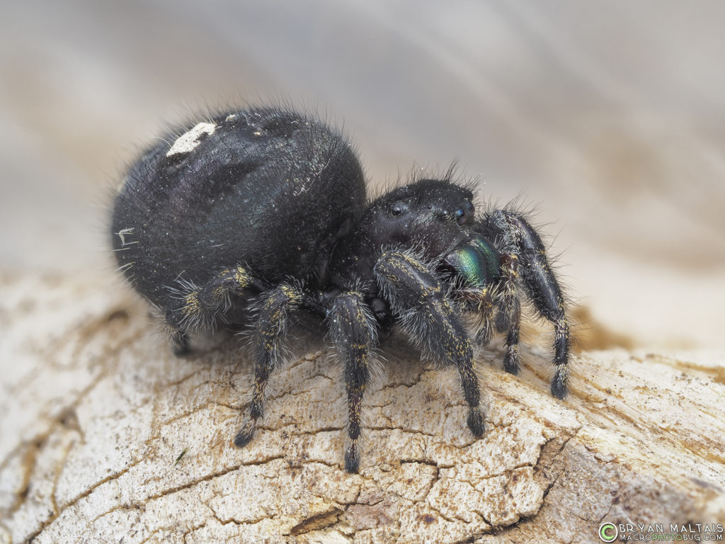 bold jumper female 13stack f56 iso200 100th